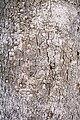 Gmelina-bark.JPG