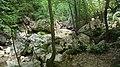 Gole del Salinello - forest - panoramio.jpg