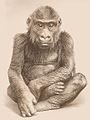 Gorilla Boy M'Pungu.jpg