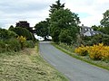 Gorse near Reivesley - geograph.org.uk - 857920.jpg
