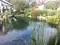 Green-Wood Cemetery Tranquility Garden koi pond.jpg