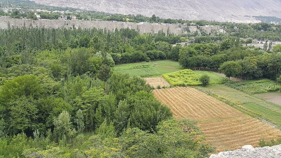 Green Fields Konodas Gilgit