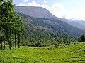 Green munnar - panoramio.jpg