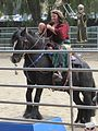 Gypsy Vanner horse at Norcal Ren Faire 2010-09-19 5.JPG