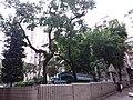 HK SW 上環 Sheung Wan 李陞街遊樂場 Li Sing Street Playground August 2019 SSG 01.jpg