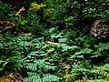 HOHRainForest-OlympicNationalPark4.jpg