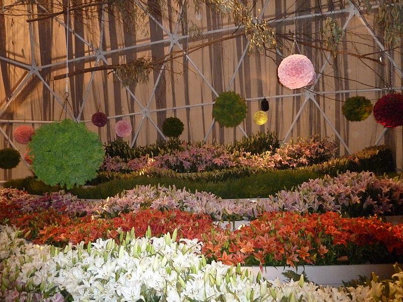 File:Haifa International Flower Exhibition P1130924.JPG