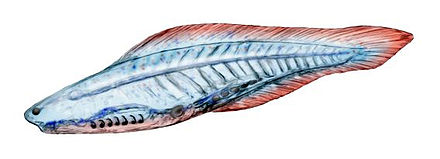The early vertebrate Haikouichthys Haikouichthys cropped.jpg