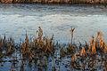 Half bevroren Jonkersloot bij zonsopgang. Locatie, De Famberhorst 02.jpg
