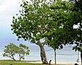 Harni-mon Beach.jpg