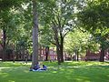 Harvard Yard, Dudesleeper.jpg