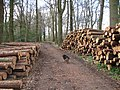 Harvested logs waiting for collection in Pavis Wood - geograph.org.uk - 1240783.jpg