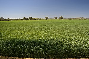 Dryland farming - An example of a dryland farming paddock