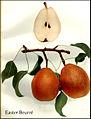 Hedrick (1921) - Easter Beurre.jpg