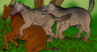 subfamily of mammals