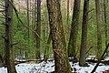Hemlock Forest (1) (32876319251).jpg