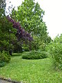 Heppenheim-Bergstr Arboretum 004.JPG