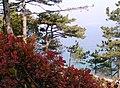 Herbst auf Krk - panoramio.jpg