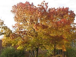 boom in herfstkleuren