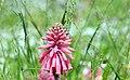 Hidden Goodies In The Grass (252118643).jpeg
