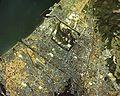 Hikone city center area Aerial photograph.1982.jpg