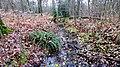 Hildener Stadtwald. Reader-7.jpg