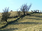 File:Hill sheep on a hill - geograph.org.uk - 699659.jpg