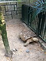 Hong Kong Zoological and Botanical Gardens 10.jpg