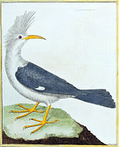 Painting of grey-and-white bird with tufted head and curved beak