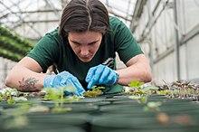 Horticulture Wikipedia