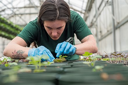 A horticulture student tending to plants in a garden in Lawrenceville, Georgia, 2015 Horticulturist Amy Boul by Lance Cheung.jpg
