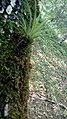 Hortus botanicus caliensis 44.jpg