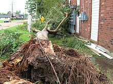 Image of an uprooted tree located between a house and a road
