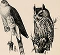 """Image from page 317 of """"Introduction to zoology; a guide to the study of animals, for the use of secondary schools;"""" (1900) (14784781082).jpg"""