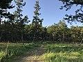 Imazu Pine Grove 4.jpg