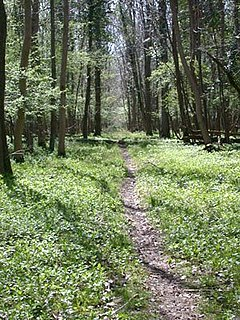 Bedford Purlieus National Nature Reserve 211-hectare (520-acre) [[ancient woodland]] in Cambridgeshire, in the United Kingdom