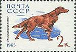 Irish-Setter-Canis-lupus-familiaris SU 1965 stamp.jpg