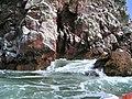 Islas Ballestas - panoramio (21).jpg