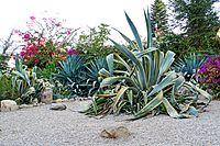 Israel-04646 - Great Variety of Plants (33534855951).jpg
