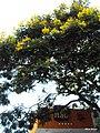 Itaú - bucólica agência de bairro, bem modesta para o banco que possui uma das marcas mais valorizadas do mundo - Brasil RS Canoas Bairro Igara 2011-janeiro - panoramio.jpg