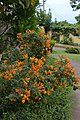 Jardim Botânico da Madeira DSC 0382 (14696712711).jpg