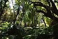 Jardin botanique (9302681393).jpg