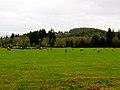 Jewell Meadows.jpg