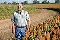 Joe Reed standing by his crop of red grain sorghum, near Edmonson, TX. (25090785286).jpg