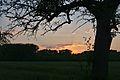 Kühkopf-Knoblochsaue Apfelbaum im Sonnenuntergang.jpg