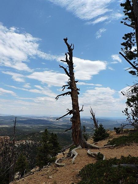 File:Kane County, UT, USA - panoramio (5).jpg