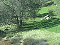Kern County, CA, USA - panoramio (60).jpg