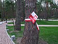 Kijów-Bykownia, polskie barwy na drzewach w polskiej częsci cmentarza wojennego - Polish flag on tree in Polish side war cemetery - panoramio (1).jpg