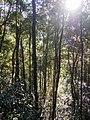 Kinabalu Park (13890347203).jpg