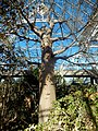 Kirstenbosch National Botanical Garden by ArmAg (39).jpg